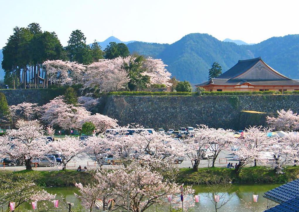 篠山城跡の桜満開