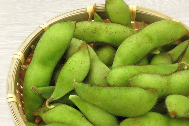 丹波篠山の黒枝豆収穫体験